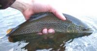 fish_spotty.jpg