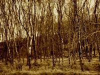lanyard_trees.jpg